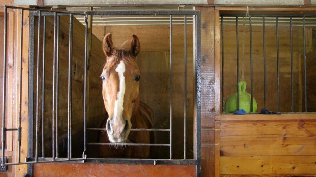 paw, stomp, horse,feet,