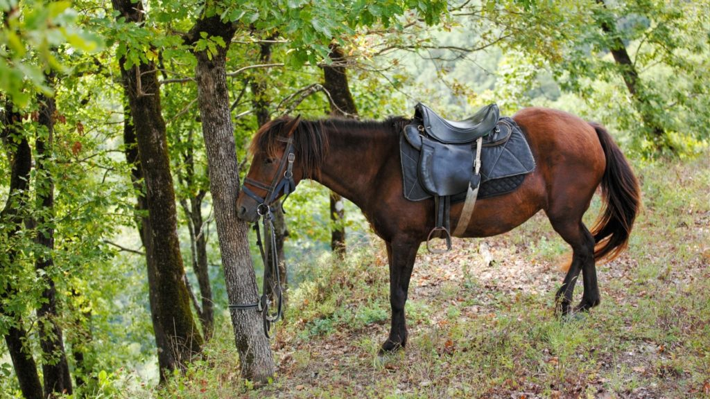 picture of a horse resting on three legs and relaxing its fourth,