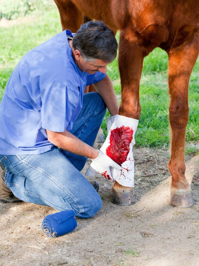 Picture of a vet examining a horses' leg,
