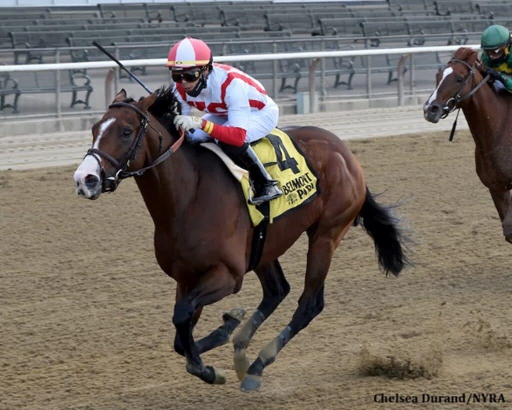 tiz the law, horse race,