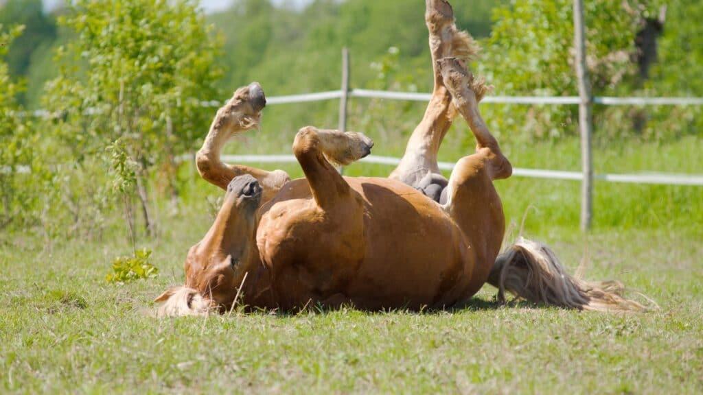 common horse diseases,