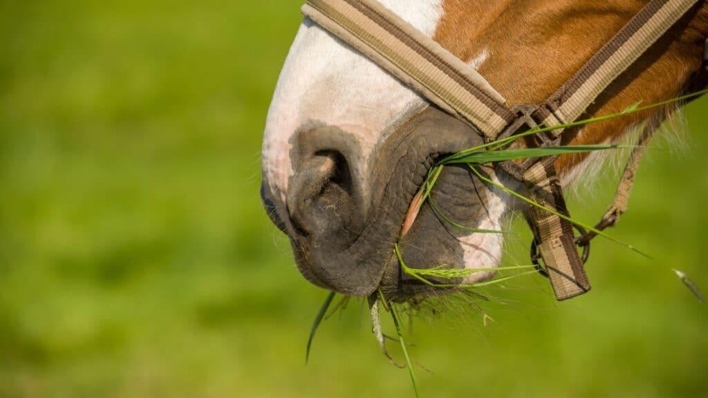 drool,horse,