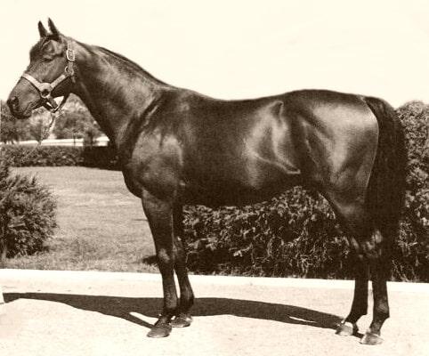 Portait of the great racehorse, Citation,