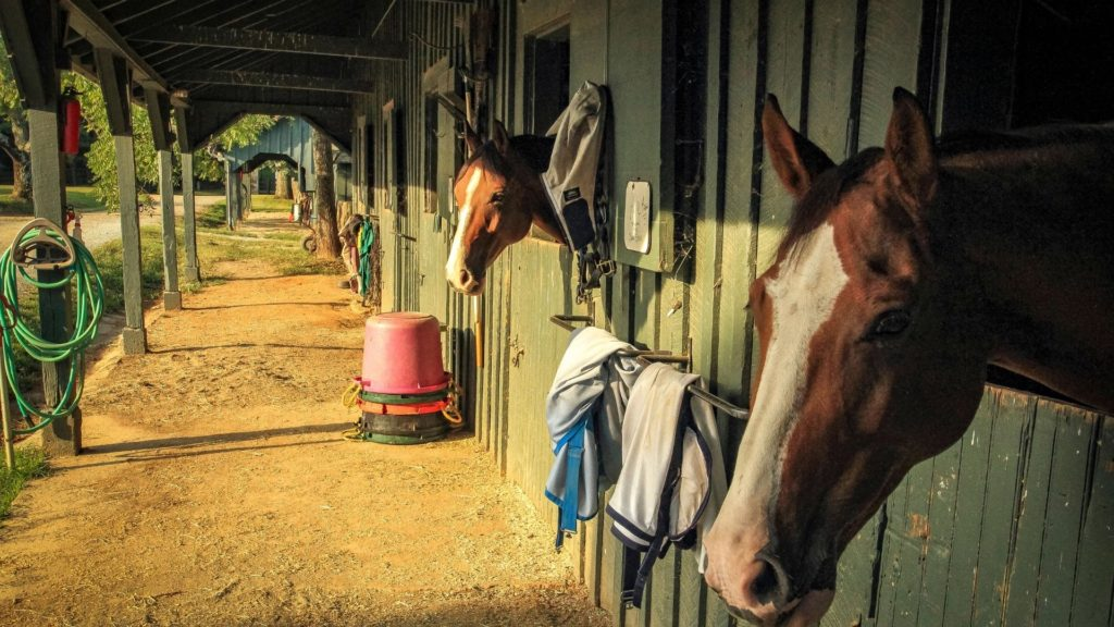 night, stable,horse,