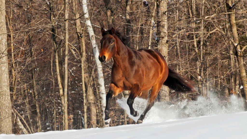 night,horse,snow,