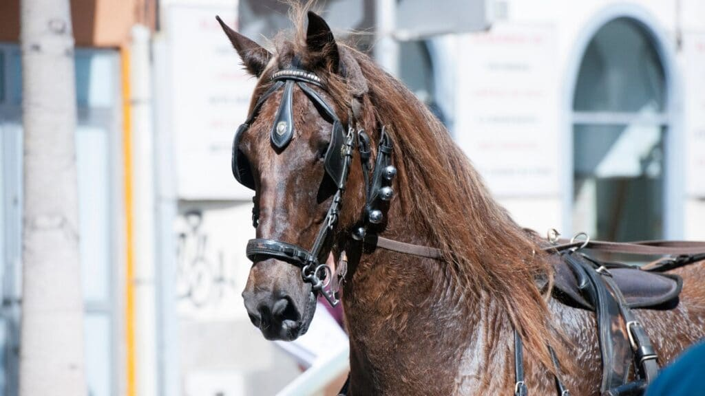 Picture of a horse full of sweat