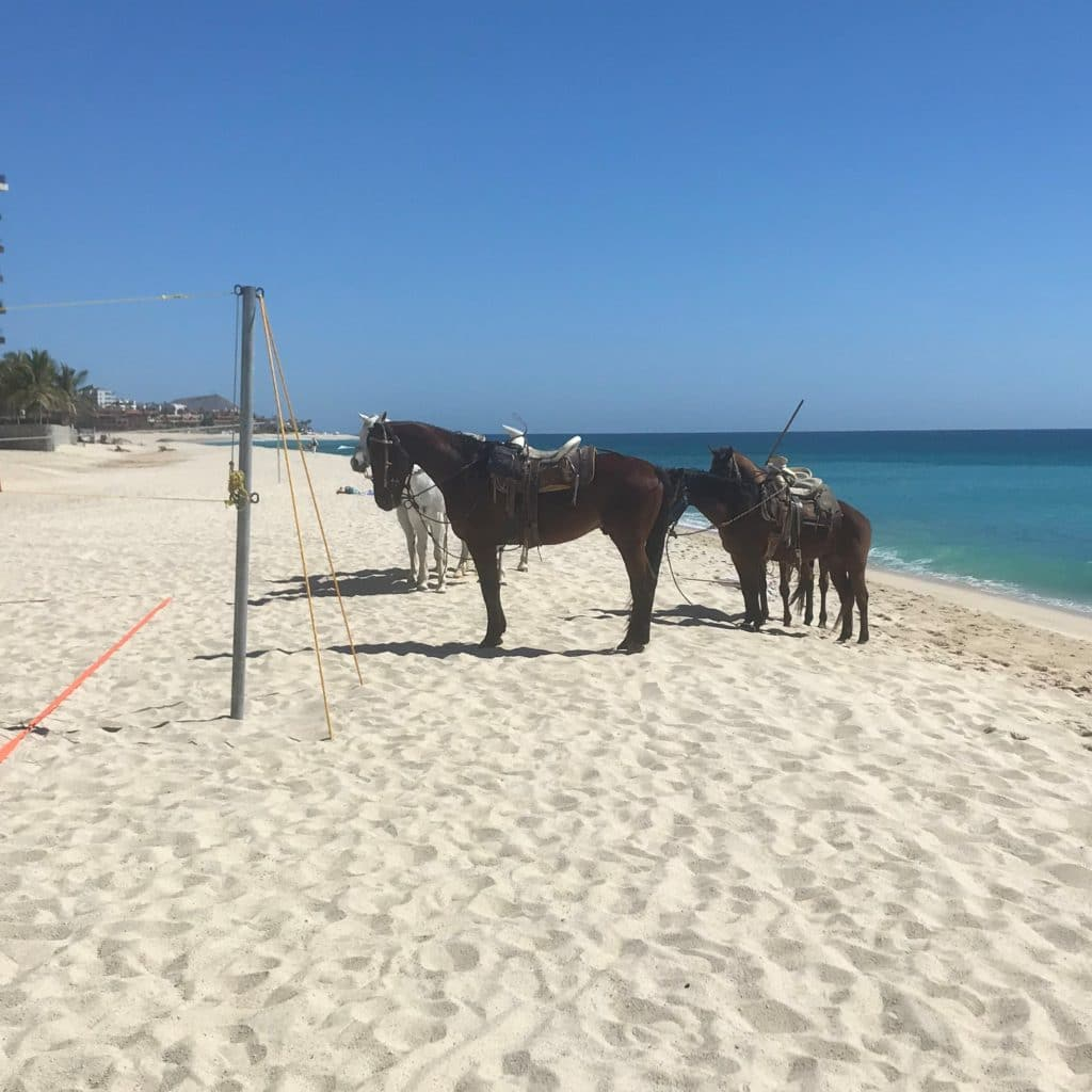 picture of horses on the beach, beaches, horses,