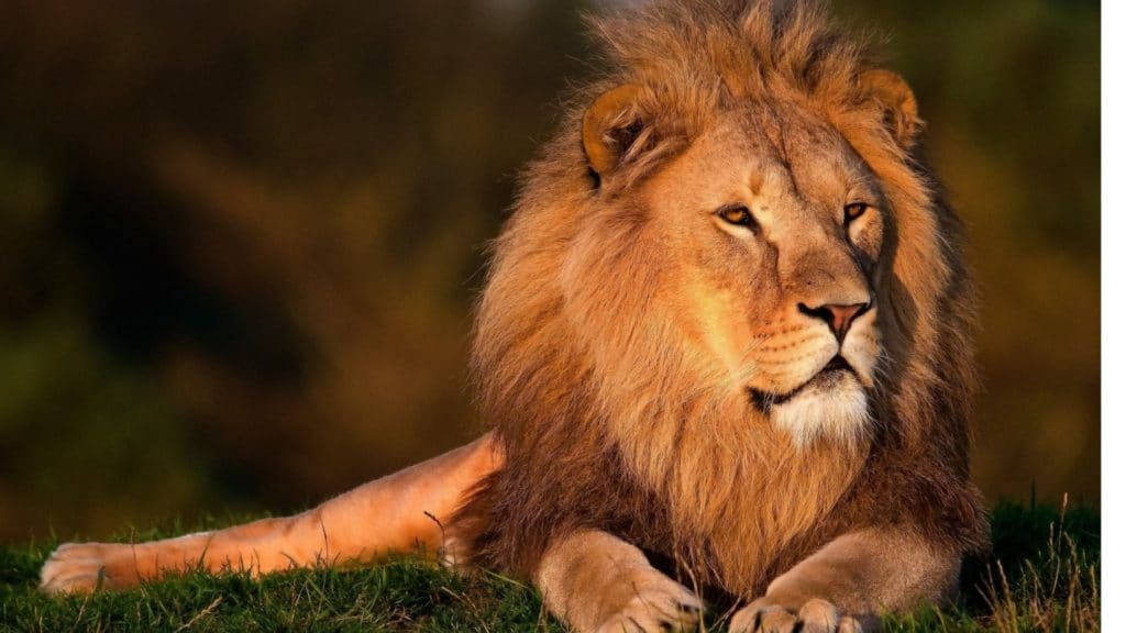 outrun,bear,lion,