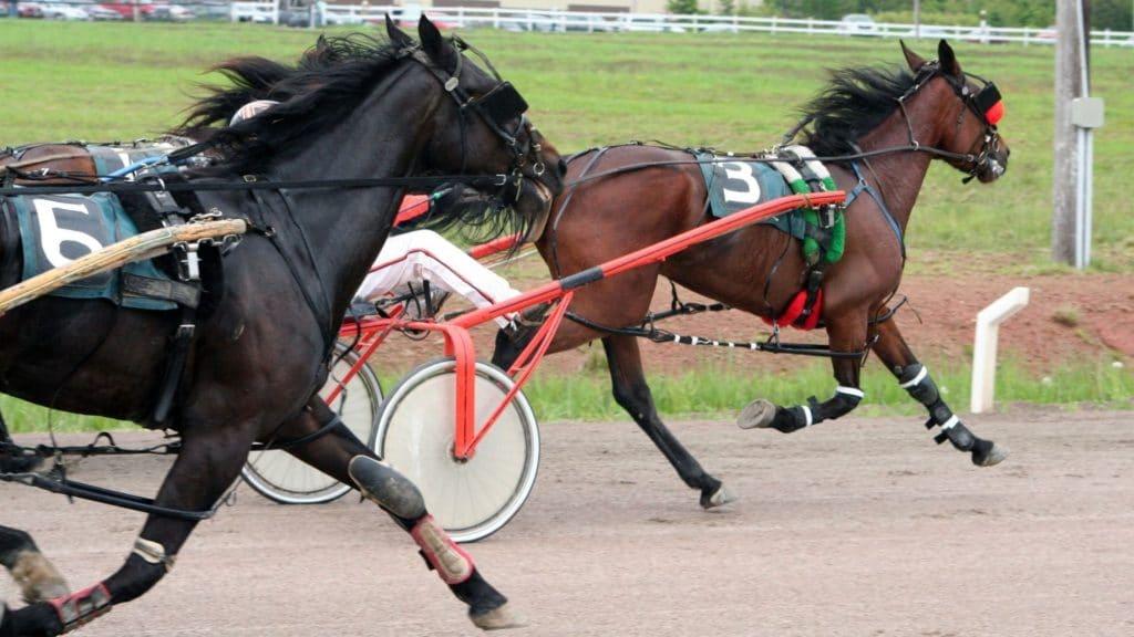 cart,horse racing,harnes racing,