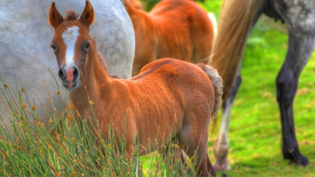 picture of baby horses in a field with other horses,