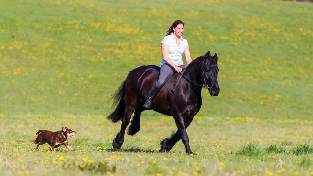 picture of a woman riding a horse with her dog following along,
