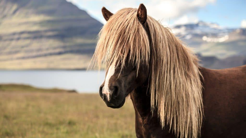 long hair,