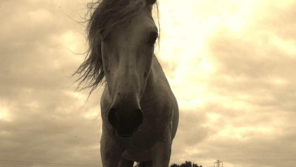 Picture of a horse in front of an ominous cloud.