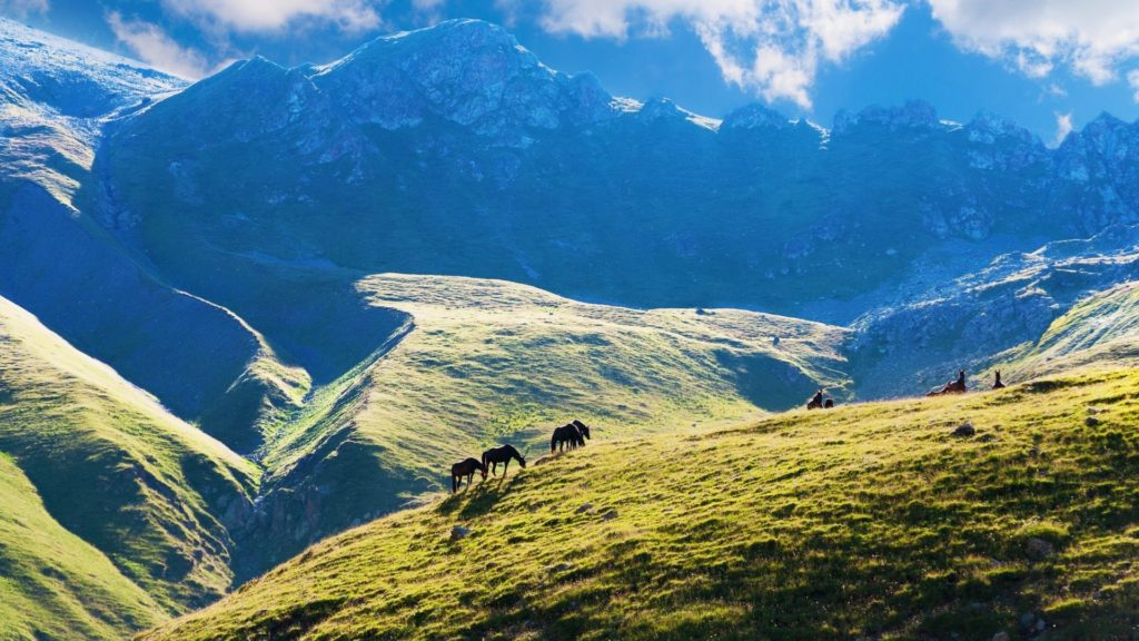 Picture of horses on a colorful mountain top.