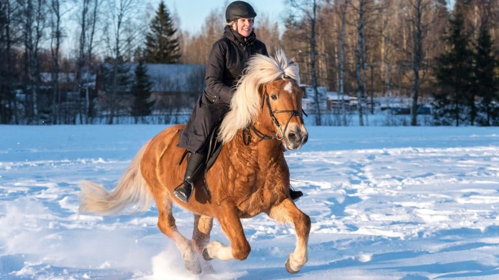 picture of a horse and rider running in the snow