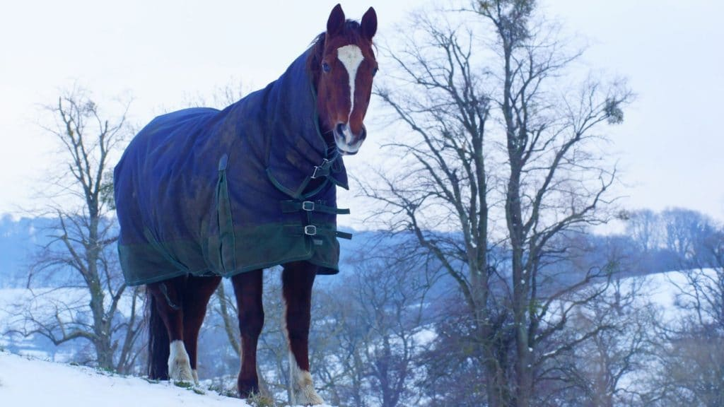 Picture of a horse wearing a blanket in the snow