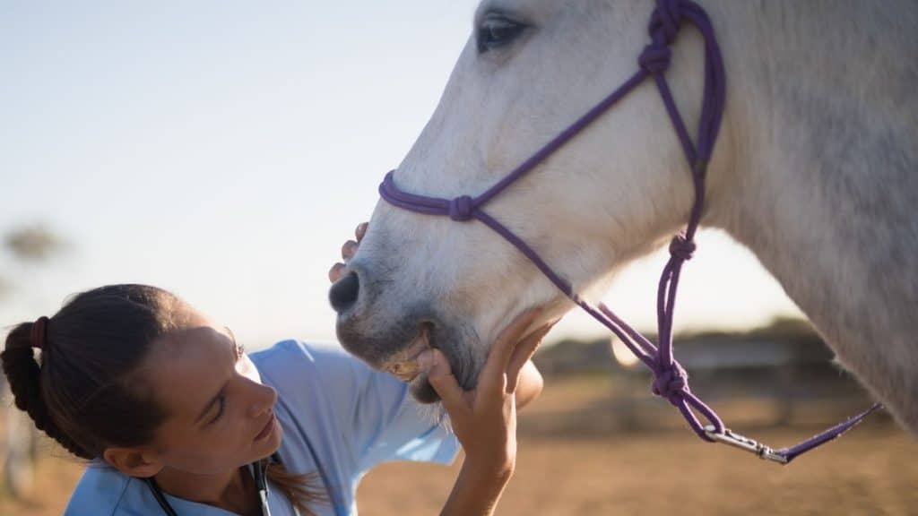 picture of a vet checking a horse for signs of dehydration,