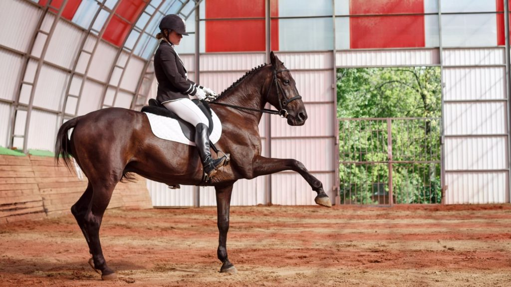Picture of a dressage horse,