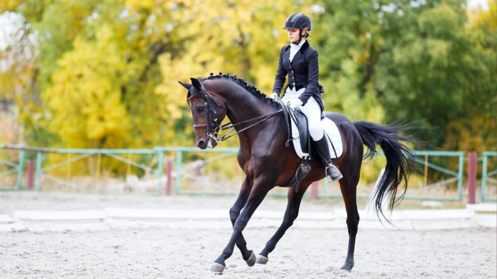 Picture of a dressage horse.