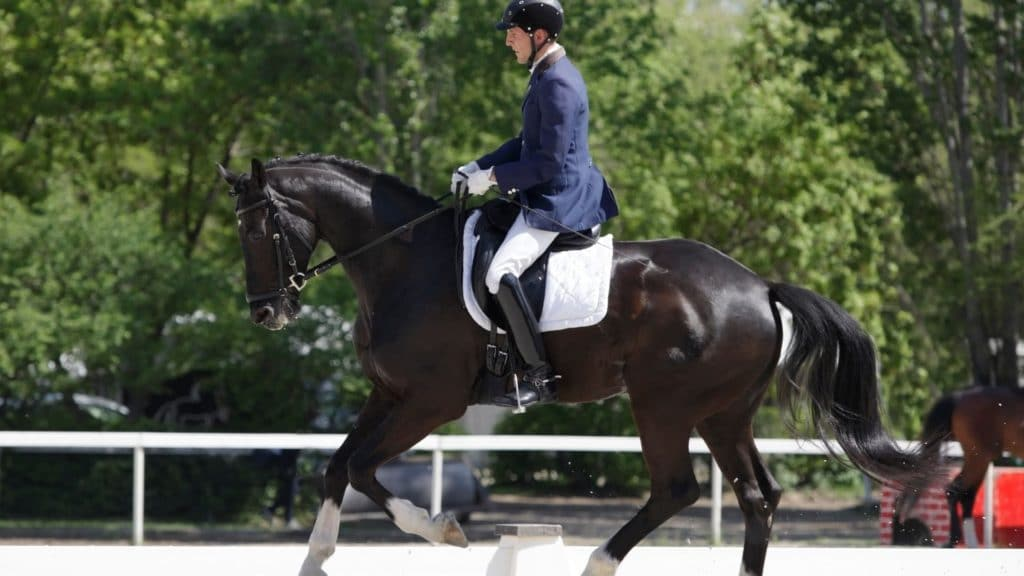 picture of a dressage horse cantering,