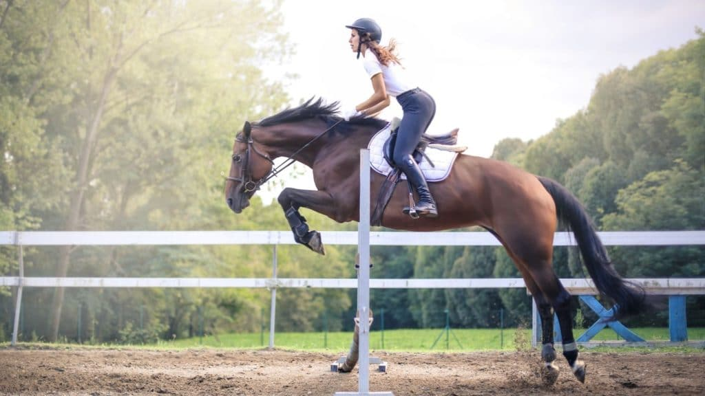 Picture of a horse jumping an obstacle with a rider.