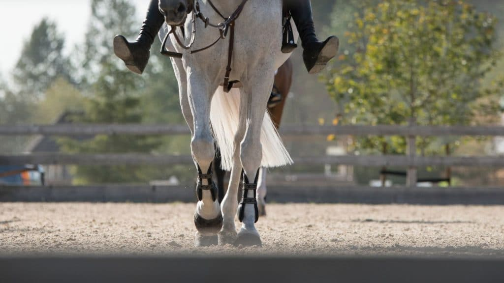 Picture of a horse wearing leg boots.