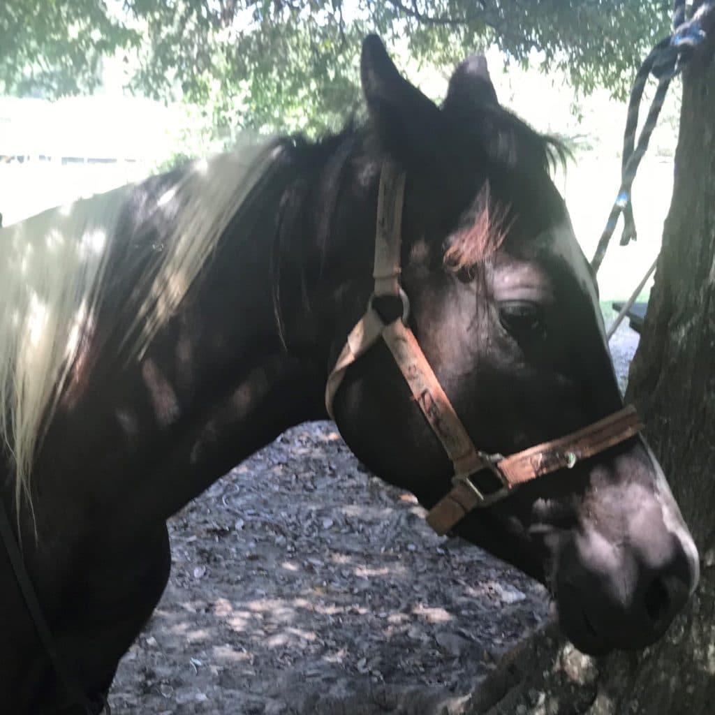 beginner, paint horse,