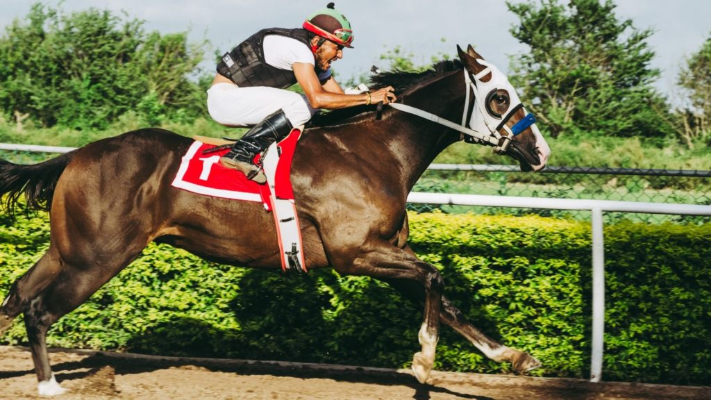 picture of a thoroughbred racehorse