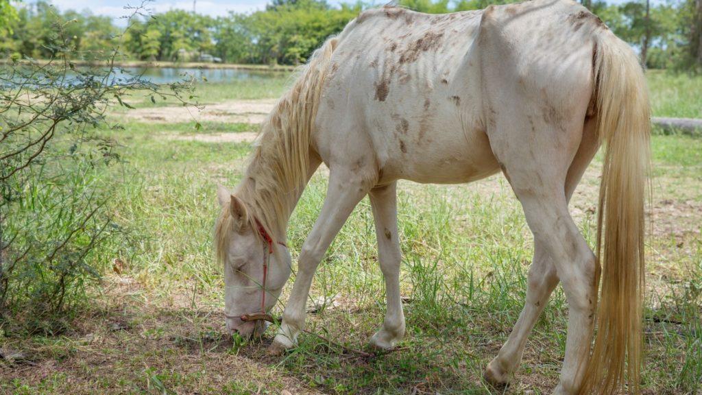 skinny,skinny horse,
