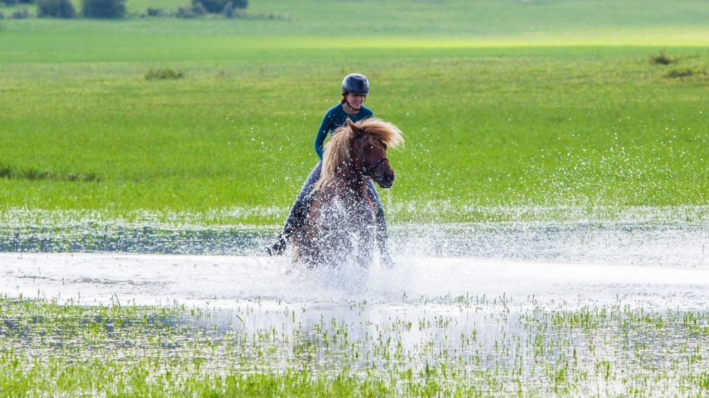 picture of an Icelandic horse ridden through water,