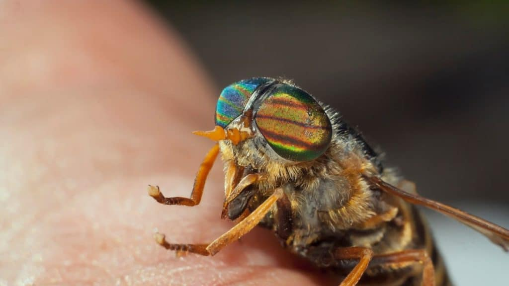 picture of a horsefly on a persons' arm.