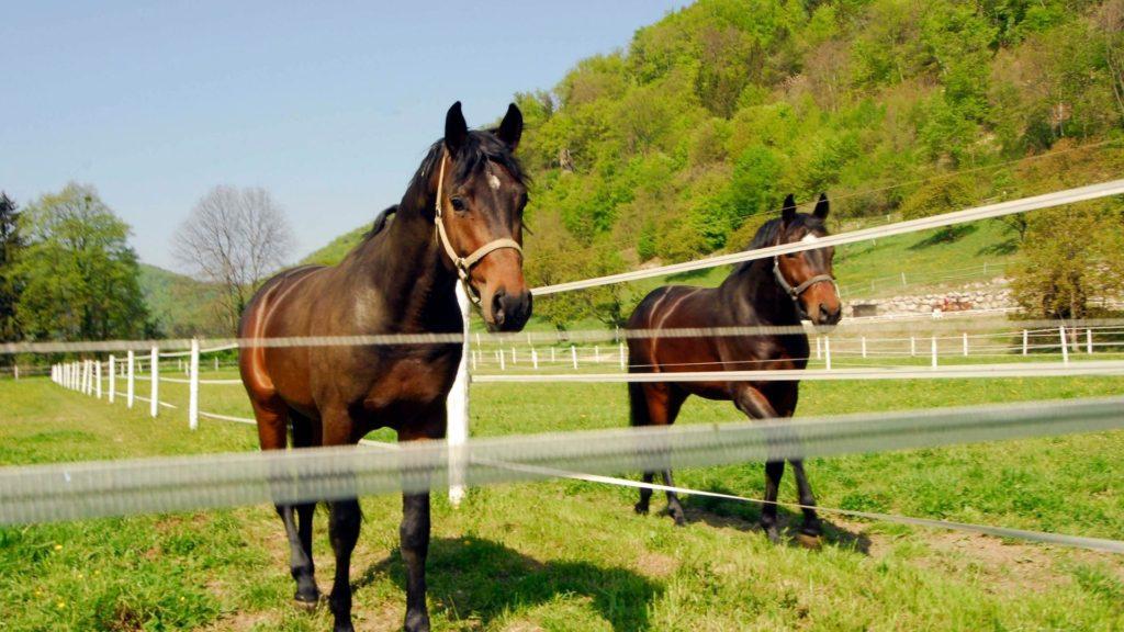 picture of horse paddocks, paddocks,