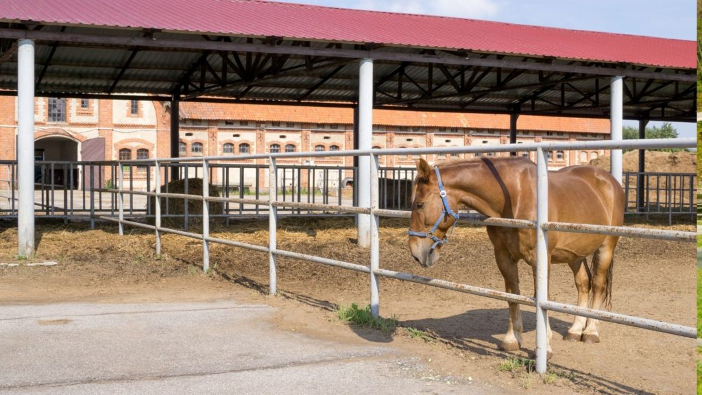 picture of a horse in a paddock, paddocks,