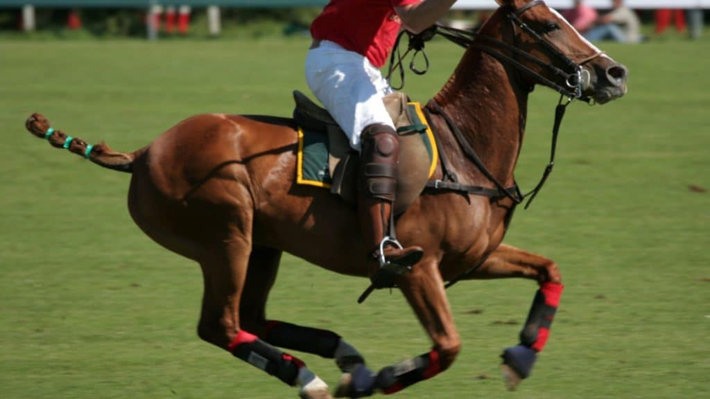 picture of polo match, horse polo,