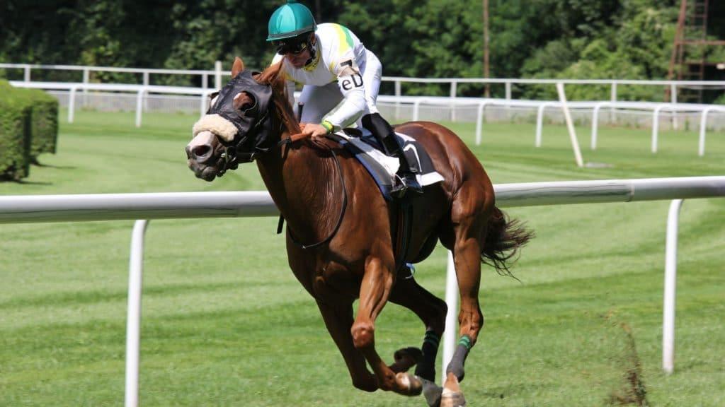 cloned horse, horse racing, clone racehorse, horse race,