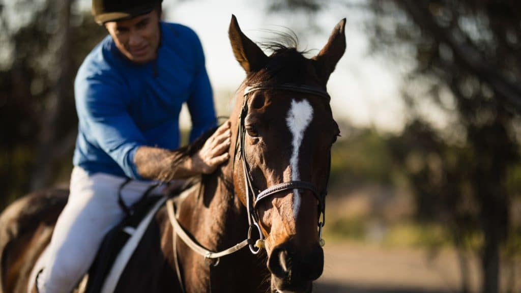 rent a horse,