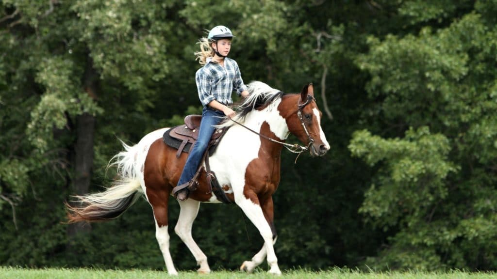 ride, girl riding a young paint horse, training a horse,