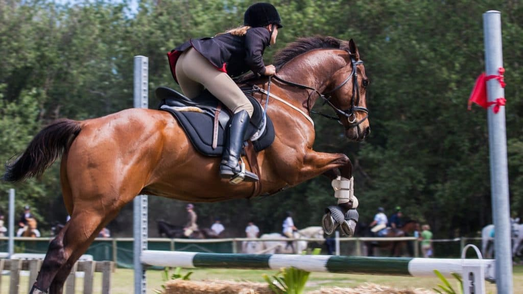Picture of a horse jumping an obstacle.