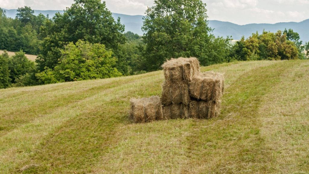 picture of square bales of timothy hay,