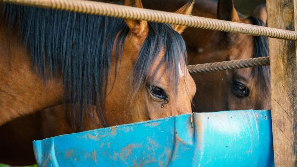 picture of a horse eating from a feed trough,