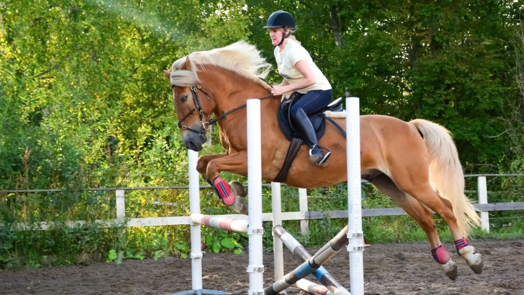 horse jumping an obstacle in training,