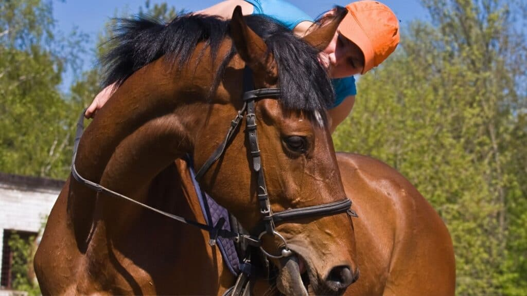 Picture of a rider talking to her horse,