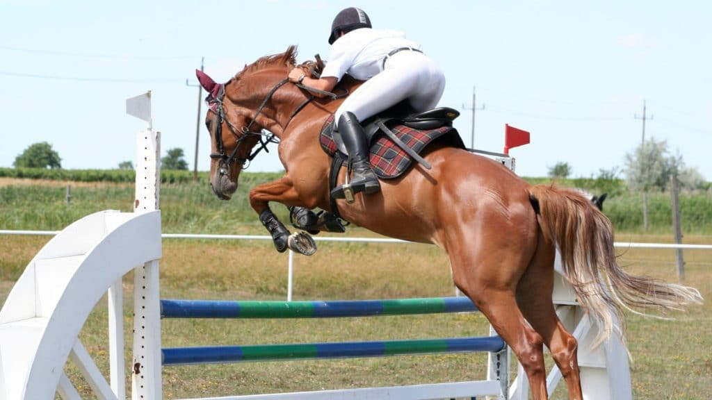 picture of a horse jumping an obstacle,