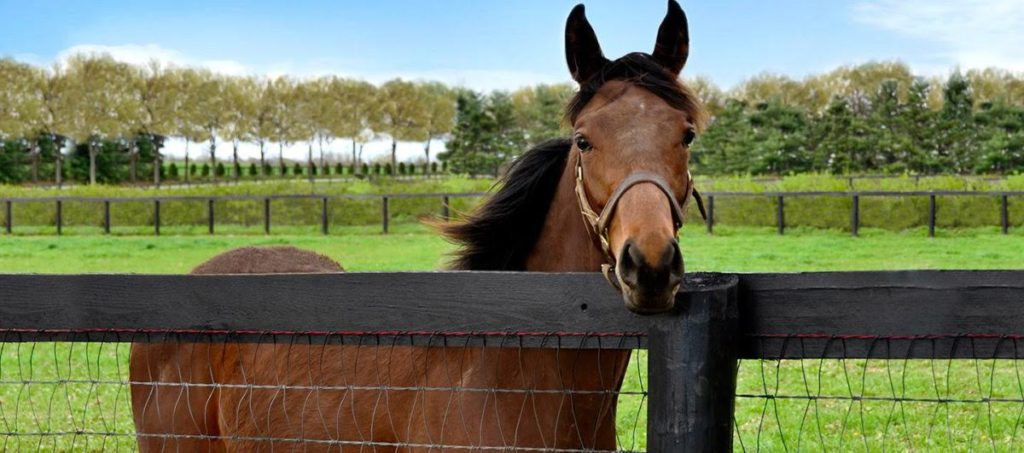 Picture of a horse near a fence made of wood board and woven wire,