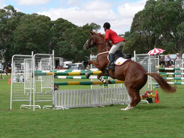 Picture of a showjumping horse leaping an obstacle.