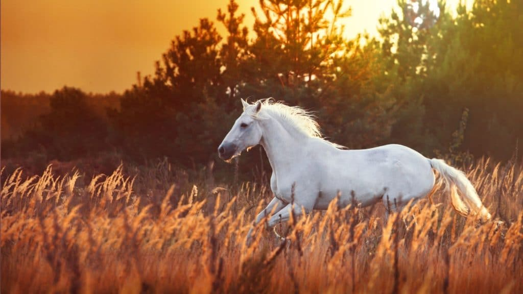 picture of a white horse running in a field,