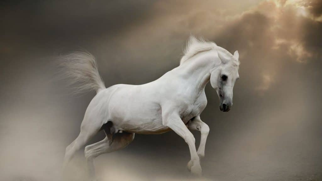 picture of a white horse in a cloud,