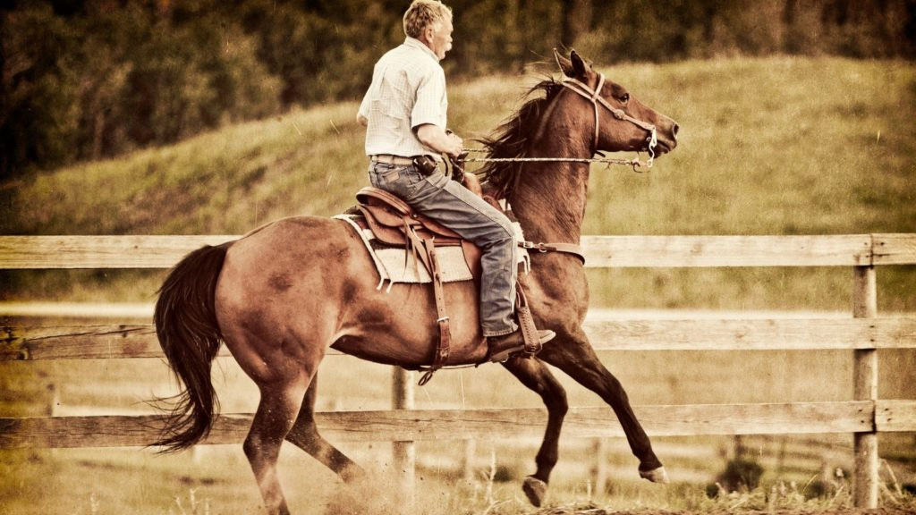 picture of a rider backing his horse to work its hind quarters,