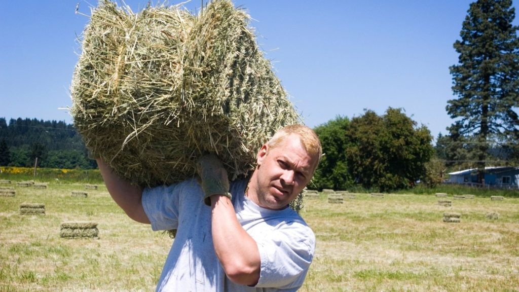 Picture of a man carrying a square bale on hay on his shoulder.