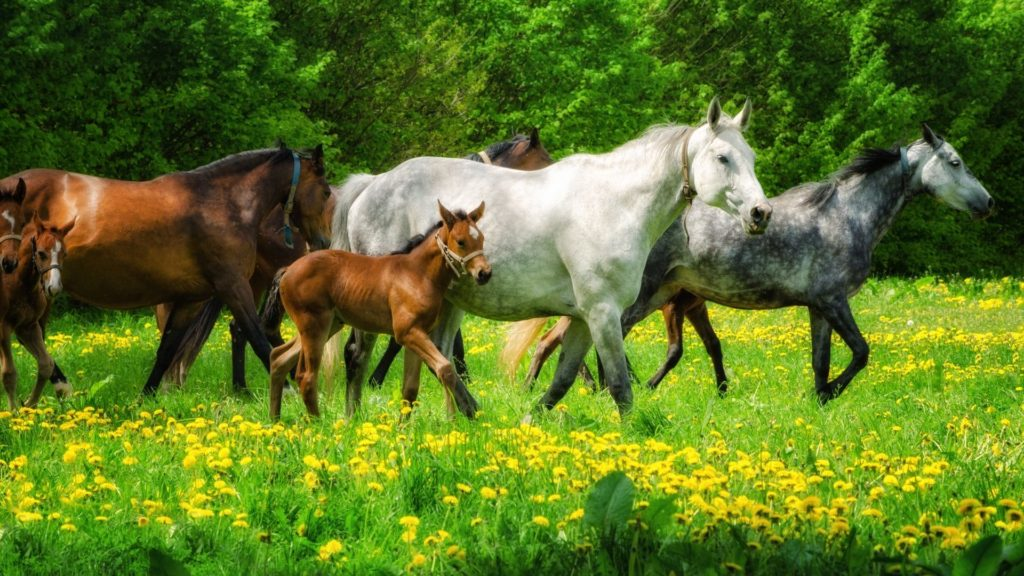 Picture of horses in a field,